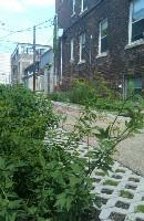 Detroit Green Alley